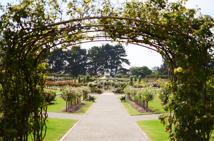 werribe mansion rose garden