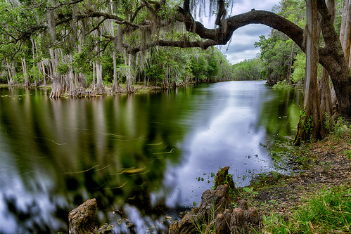 longexposure usa cloud reflection tree water weather river landscape orlando lowlight florida everglades kissimmee flowersplants centralflorida headwaters swampmarsh shinglecreek