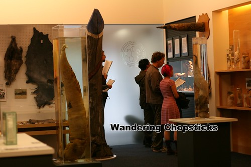 4 Icelandic Phallological Museum - Reykjavik - Iceland 42