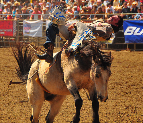 california horse cowboy lakeside western rodeo mustang southerncalifornia rider sportsaction bronc chiropractor oldwest sportsphotography exertion broncriding lakesiderodeo barebackbroncriding