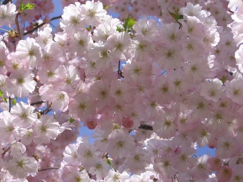 Single pink flowers