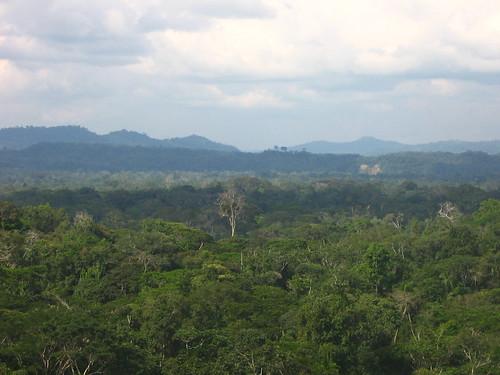 The Amazon canopy