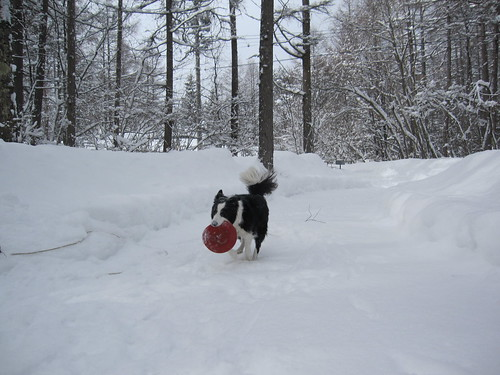 雪の中のフリスビー by Poran111