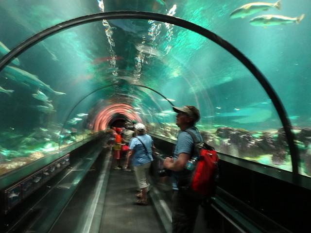 Aquarium Tunnel SeaWorld Orlando | Flickr - Photo Sharing!