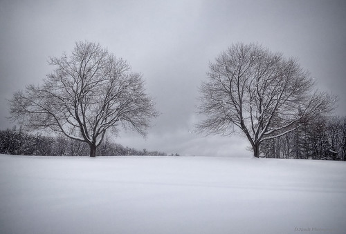 trees winter snow nature landscape newengland newhampshire golfcourses