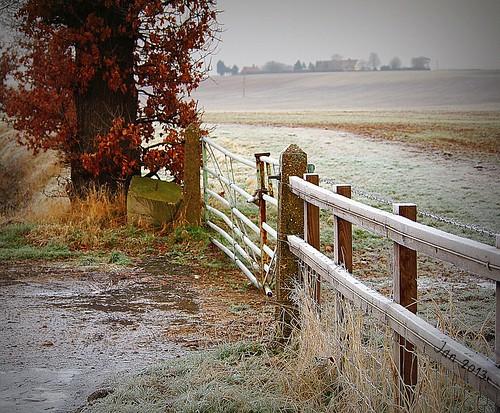 Frosty Fence Friday!