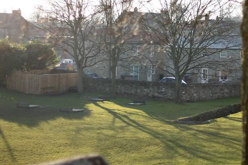 Sunny day - crocus