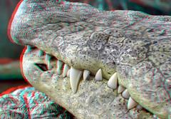 Jaw Crocodile Blijdorp 3D