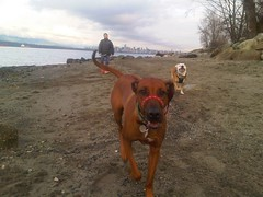 Spanish banks fun