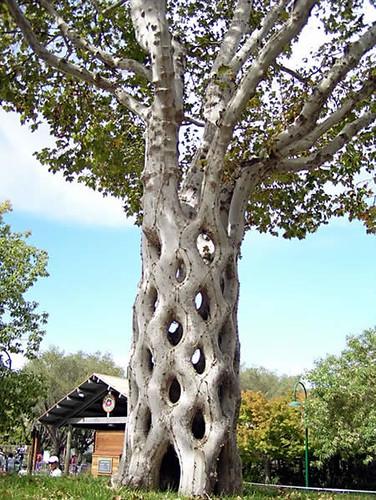 weird_trees18