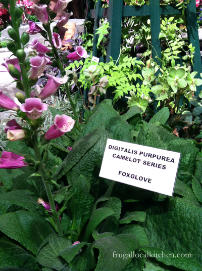 Smartphone and Plant Identification and Ideas: Foxglove