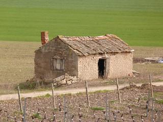 Foto de viñedos en Viña Mayor (Valladolid)