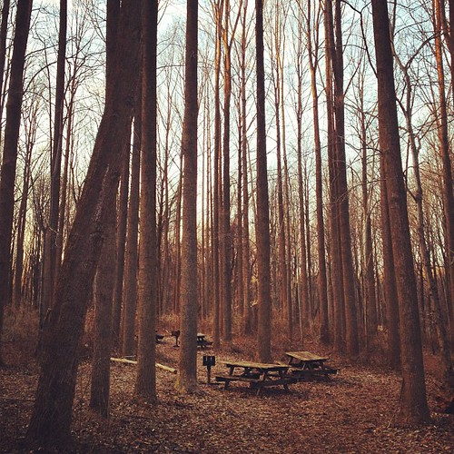 trees winter nature forest square woods media picnic empty branches nopeople squareformat rise picnictables emptytables ridleycreekstatepark mediapa iphonephotos emptybranches iphoneography cellularlife instagramapp uploaded:by=instagram iphone4s foursquare:venue=4a9abbaef964a520653220e3