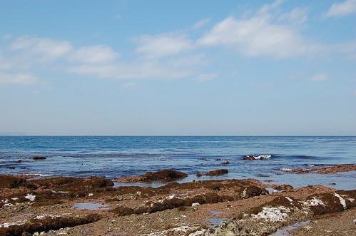 ★引き潮の海から・・・★春の恵み