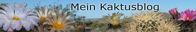 Neuer Header - Mein Kaktusblog