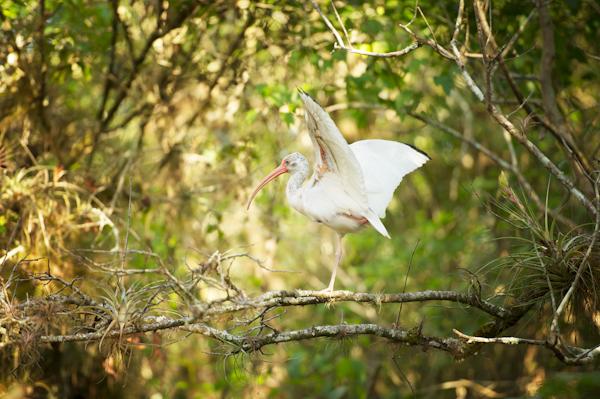 RYALE_Everglades-080