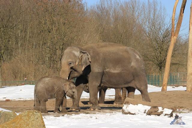 Stippvisite der Elefanten