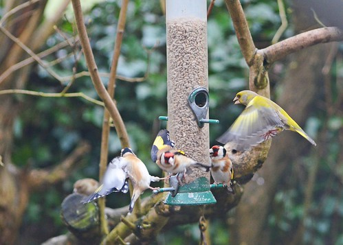 Fatballs and Feeders 1 by birbee
