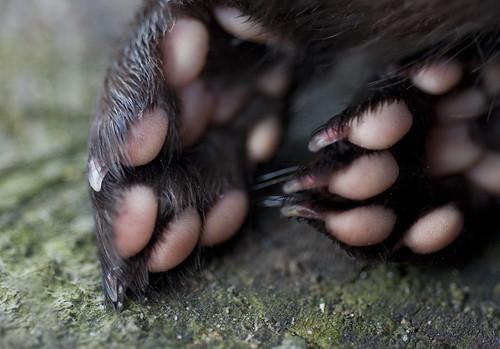 Mink Feet I