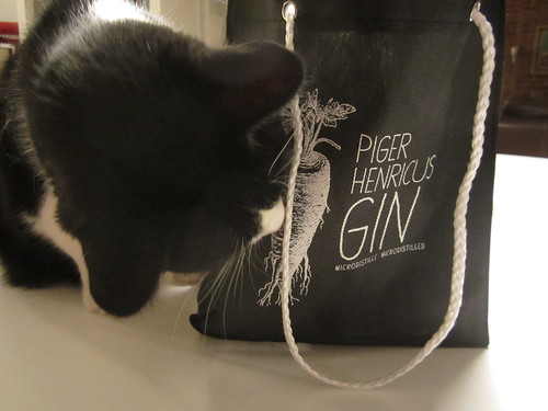 Piger Henricus gin