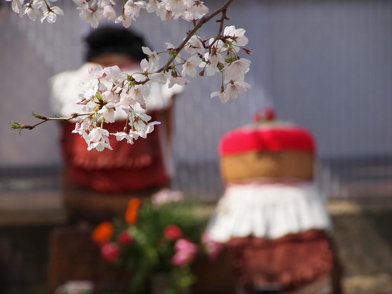Sakura in Kobe