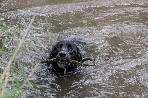 Dog enjoys the water