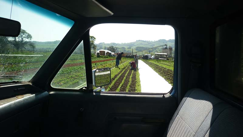 sonoma-soil_50_pauls-produce