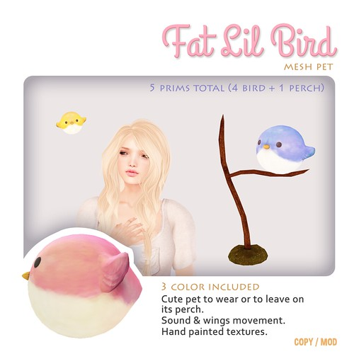 Fat Lil Bird, the pet
