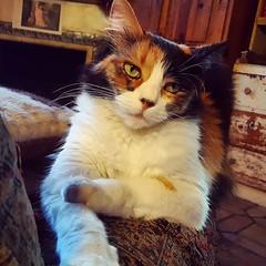 emo cat 🐱 #catstagram #cat #santabarbara