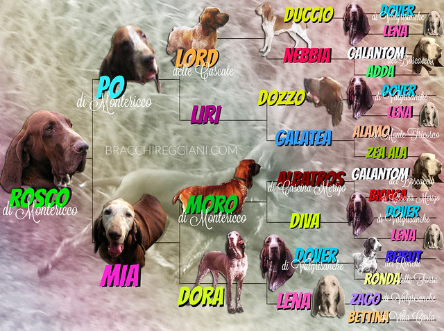 PhotoPedigree Rosco di Montericco