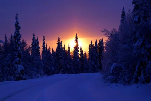[フリー画像素材] 自然風景, 森林, 雪, 朝焼け・夕焼け, 風景 - フィンランド ID:201302132000