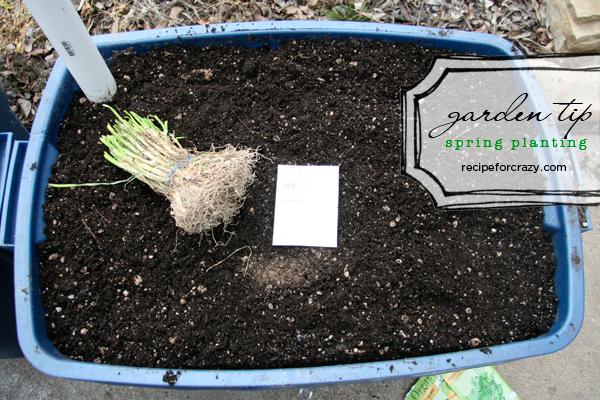 Spring garden planting tips