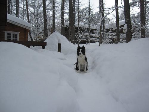 雪の山とランディ・・・2013.2.16 by Poran111