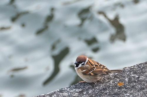 Osaka Bird