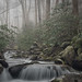 Smoky Day on LeConte Creek by Greg Holtfreter