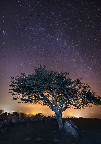 longexposure sky tree night stars landscape lowlight astrophotography churchyard hawthorn lightpollution milkyway anglesey northwales moelfre hencapellligwy noctography capellligwy Astrometrydotnet:status=failed Astrometrydotnet:id=alpha20130382037958