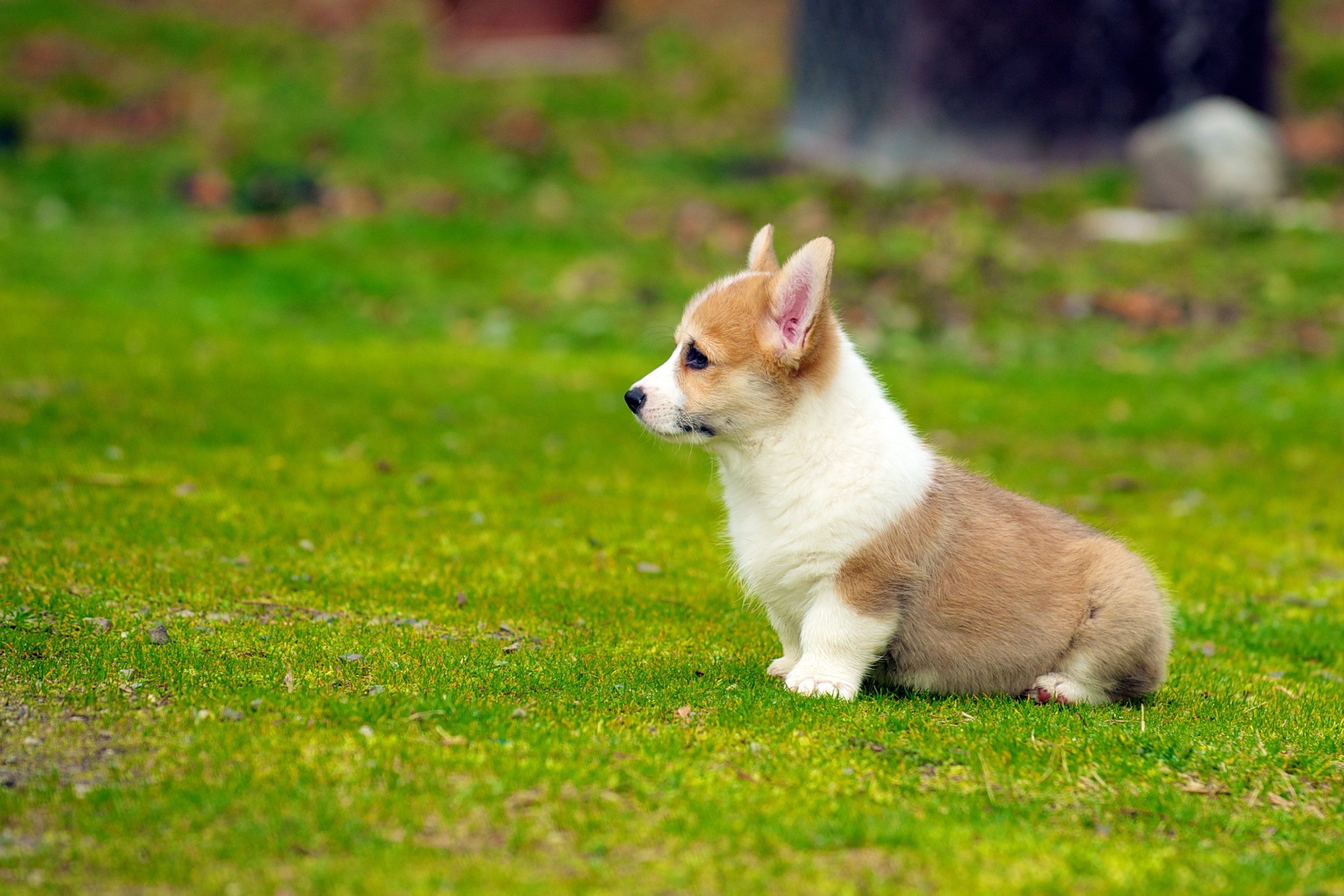 Small Cute Dog Breeds That Don
