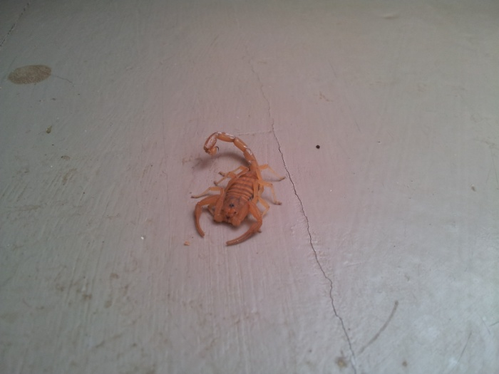 Scorpion action
