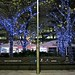Illuminated trees in Canary Wharf