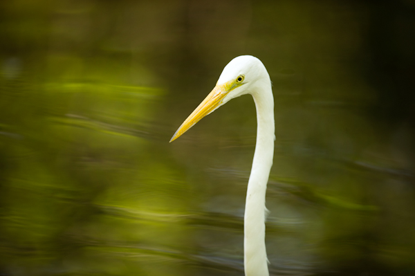 RYALE_Everglades-057