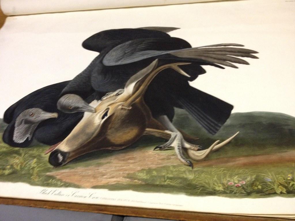 audubon bird and deer head