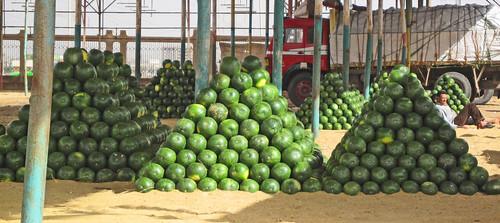 EgyptWatermelon-1