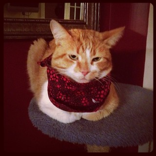 Jake with cravat