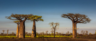 Village with Baobabs, Madagascar | by RaKra42