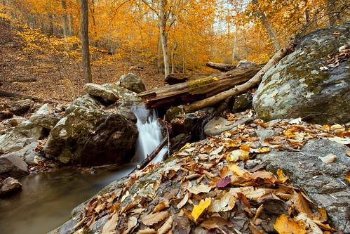 longexposure autumn fall leaves stream seasons hiking maryland foliage trail cascades elkridge cascadetrail patapscostatepark throwbackthursday