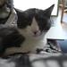 Small photo of Pushy cat