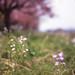 野に咲く花々