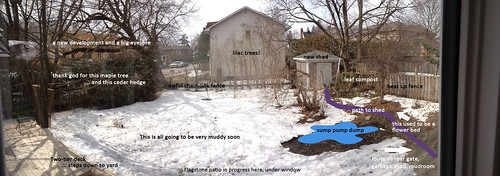 Backyard, April 2013