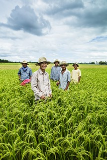Increasing Yields in Cambodia: Farmers in a lush field
