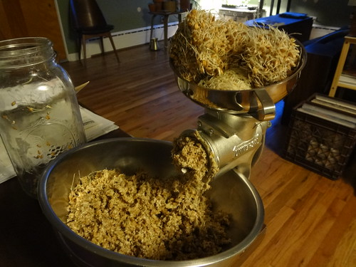 2013.04_grinding sprouted wheat